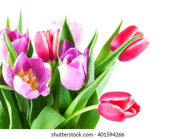 bouquet of tulips on a white background
