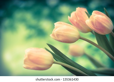 Bouquet of tulips. Bouquet of pink tulips on a background of green trees. Retro photo.