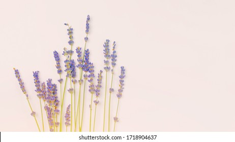 bouquet of violet lilac purple lavender flowers arranged on white table background. Top view, flat lay mock up, copy space. Minimal background concept. Dry flower floral composition isolated on white