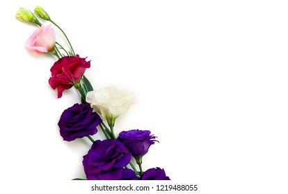 Bouquet of violet, white, pink and red flowers Eustoma (common names: Texas bluebells, bluebell, lisianthus, prairie gentian) on a white background with space for text. Top view, flat lay