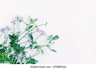Bouquet of violet wild sweet pea flowers isolated on white background. Flat lay, top view with space for your text