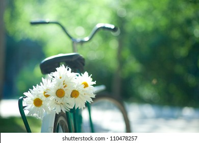 Bouquet of white chamomiles on the trunk of an old bicycle. Close-up