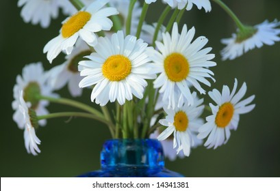 Bouquet of white daisies