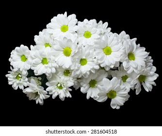 The bouquet of white flowers of a chrysanthemum isolated on black background.