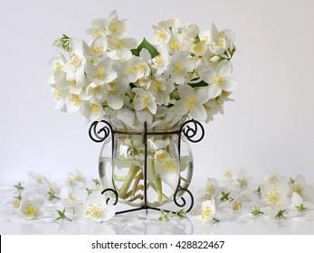 Bouquet of white jasmine flowers in a vase. Romantic floral still life with white jasmine flowers and petals. Mock orange jasmine - Philadephus flowers. Home flower decoration.