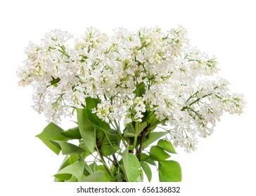 A bouquet of white lilac on a white background.