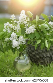 a bouquet of white lilacs in a clear vase