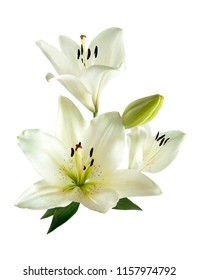 A bouquet of white lilies isolated on a white background. Lily flower.