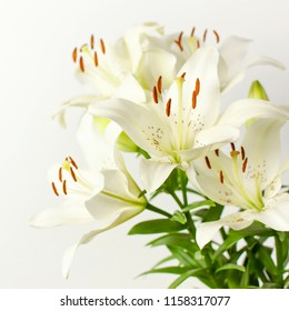 Bouquet of white lilies isolated on a white background. Flowers lily beautiful bouquet white flowers floral background concept holiday congratulation.