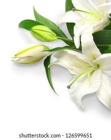 Bouquet of white lilies on a white background
