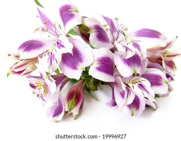 Bouquet of white and purple Alstroemeria flowers on white background