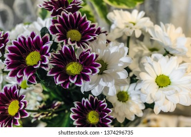 Bouquet of white and purple chrysanthemum. Natural background with limited depth of field.