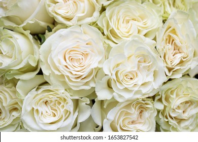 Bouquet of white roses close up