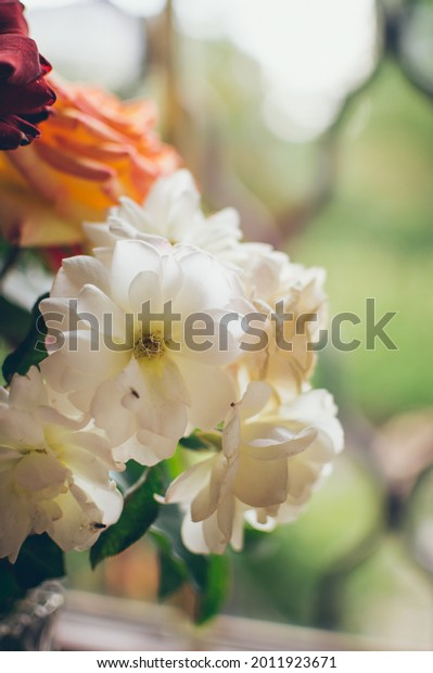 bouquet-white-roses-floribunda-closeup-6