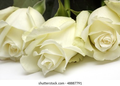 The bouquet of White roses lays on a white background