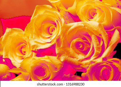 Bouquet of white roses for women's day or wedding, color inversion, selective focus