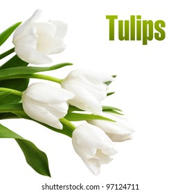 bouquet of white tulips on white background