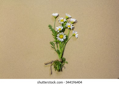 bouquet of wild daisies field blank greeting card on paper background