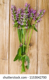 Bouquet of wildflowers lilac. Studio Photo