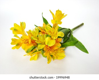 Bouquet of yellow Alstroemeria flowers isolated on white background