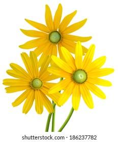 Bouquet of Yellow blackeyed Susan flower, rudbeckia