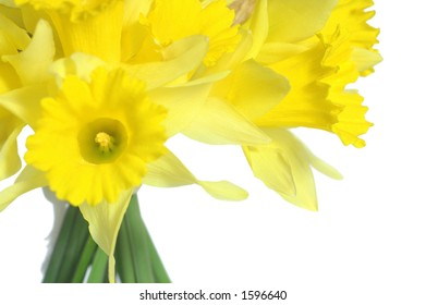 Bouquet of yellow daffodils isolated on white.