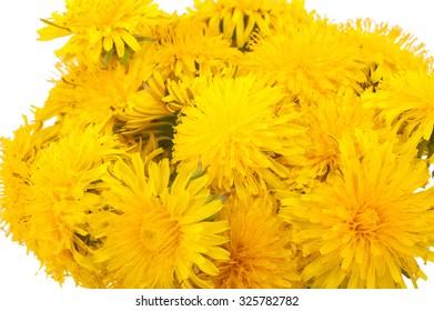 Bouquet of yellow dandelions