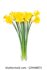 Bouquet of yellow lent lily daffodil or narcissus isolated on white background