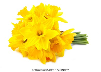 bouquet of yellow lent lily (daffodil) isolated on white background.