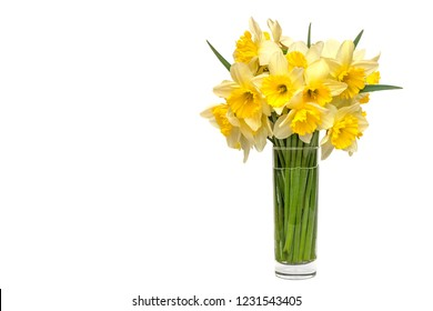 bouquet Yellow narcissus flowers in a glass vase Isolated on white background and space for your text.