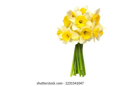 bouquet Yellow narcissus flowers  Isolated on white background and space for your text.