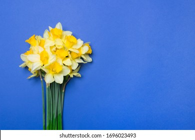 bouquet of yellow narcissus flowers on blue colored paper background with copy space.