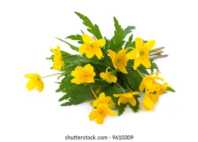 Bouquet of yellow spring flowers