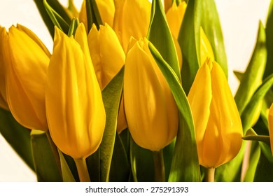 Bouquet of yellow tulips against a white background