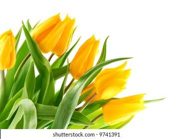 Bouquet of yellow tulips in the bottom left corner.