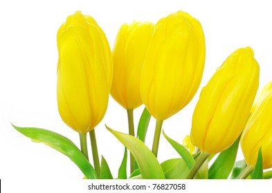 bouquet of yellow tulips isolated on white