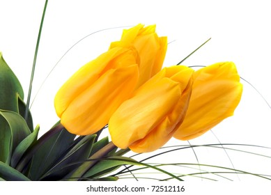 bouquet of yellow tulips on white background