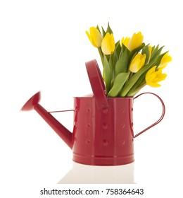 Bouquet yellow tulips in red watering can isolated over white background