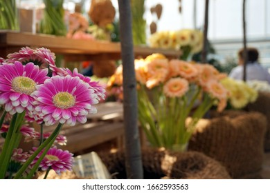 Bouquets of colorful purple and violet gerberas flowers in glass vases