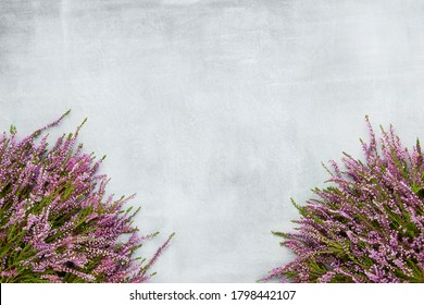 Bouquets of Pink Common Heather flowers on gray background. Copy space for text, top view. Flat lay, selective focus