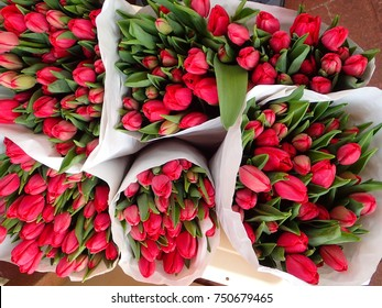 Bouquets of red tulips on a flower market in the Netherlands.