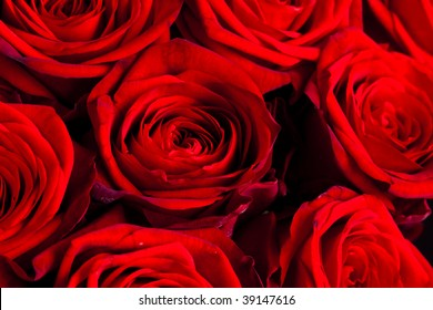 Bouquets of Roses