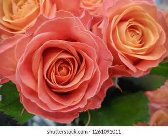 Bouquets of roses, close-up