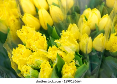 Bouquets of yellow tulips, close up, selective focus. Gardening and Floriculture,