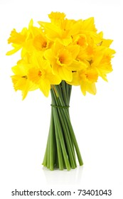 bouqut of yellow lent lilyl (daffodil) isated on white background.