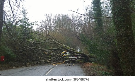 Bovey Tracy, Devon, UK, March 26 2016 - Showing a fallen tree on the main road between Haytor and Bovey Tracy during Easter Saturday
