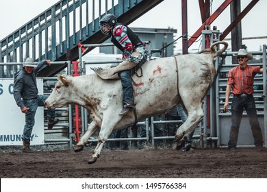 Bowden, Canada, 26 july 2019 / Cow or bull riding during western style town rodeo; dangerous sport and animal cruelty concepts