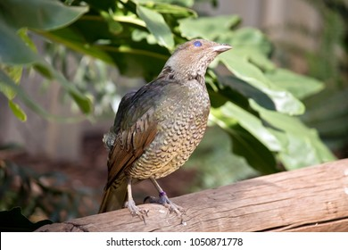the bower bird is perched a railing