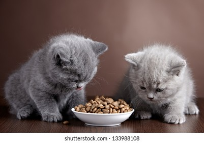 Bowl of cat food and two kittens