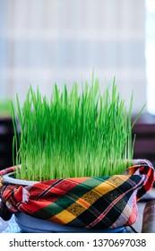 Bowl of Fresh green grass